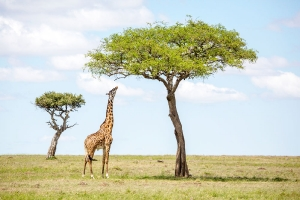 Masai Mara_10