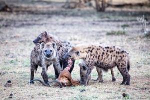 Masai Mara_12