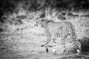 Masai Mara_8